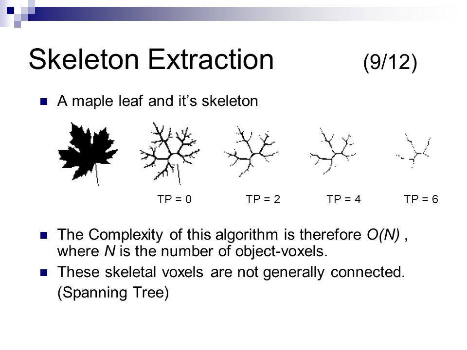 Skeleton Extraction (9/12) A maple leaf and it's skeleton The Complexity of this algorithm is therefore O(N), where N is the number of object-voxels.