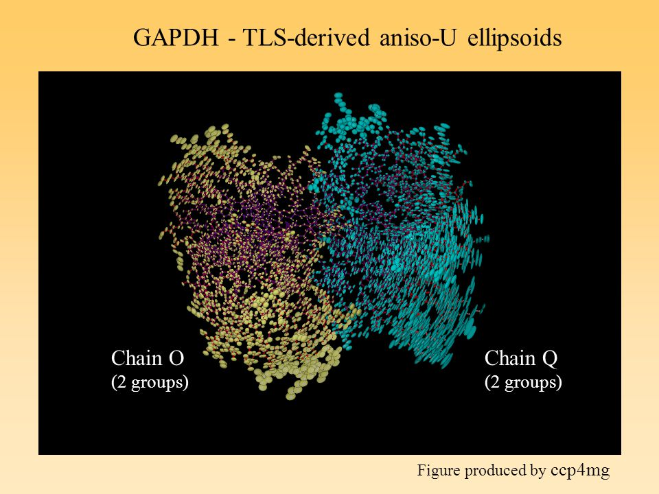 GAPDH - TLS-derived aniso-U ellipsoids Chain O (2 groups) Chain Q (2 groups) Figure produced by ccp4mg