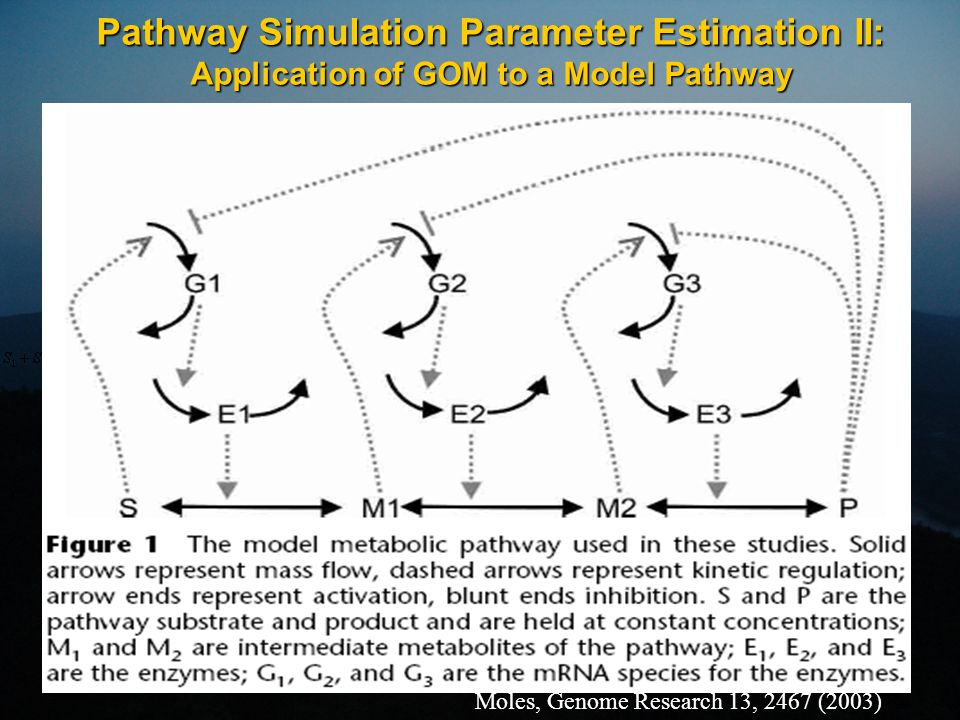 Pathway Simulation Parameter Estimation II: Application of GOM to a Model Pathway Moles, Genome Research 13, 2467 (2003)