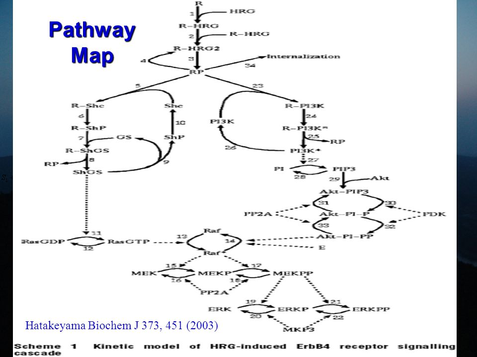Pathway Mathematical Model Materi & Wishart Drug Discov Today 12, 295 (2007)