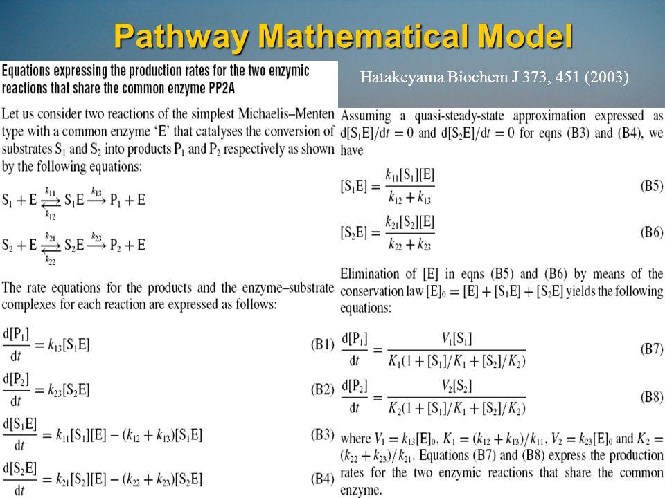 Pathway Simulation Equations Hatakeyama Biochem J 373, 451 (2003)