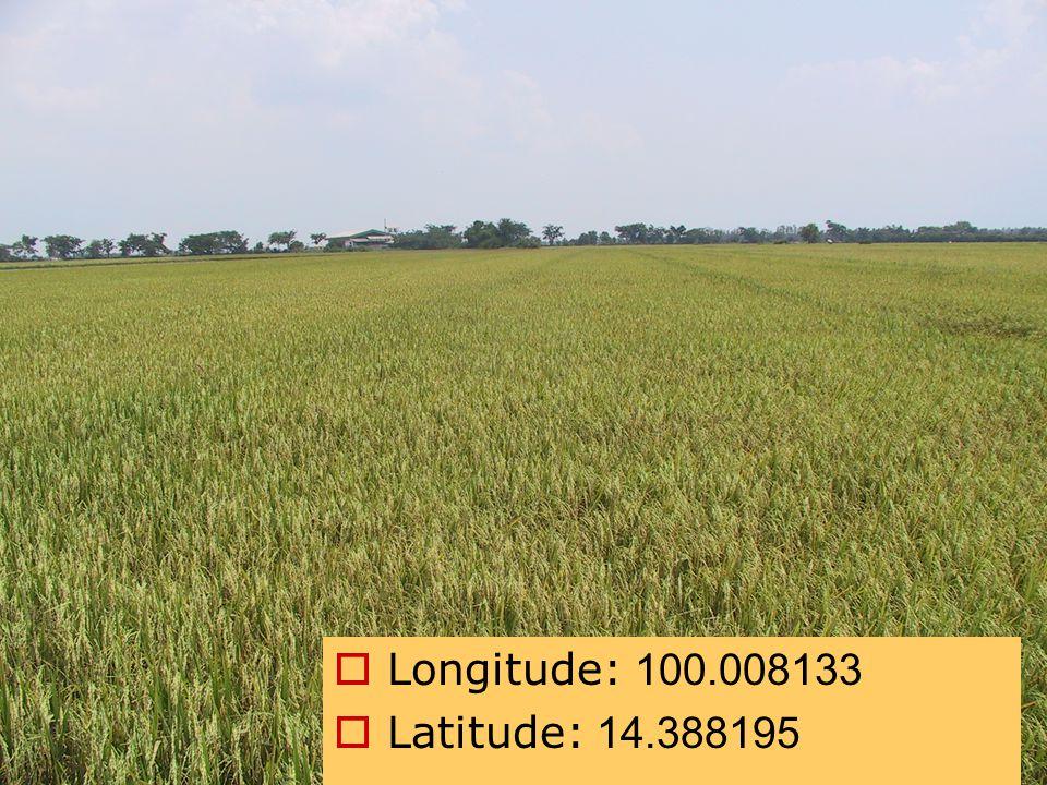 Field photos  Longitude: 100.008133  Latitude: 14.388195