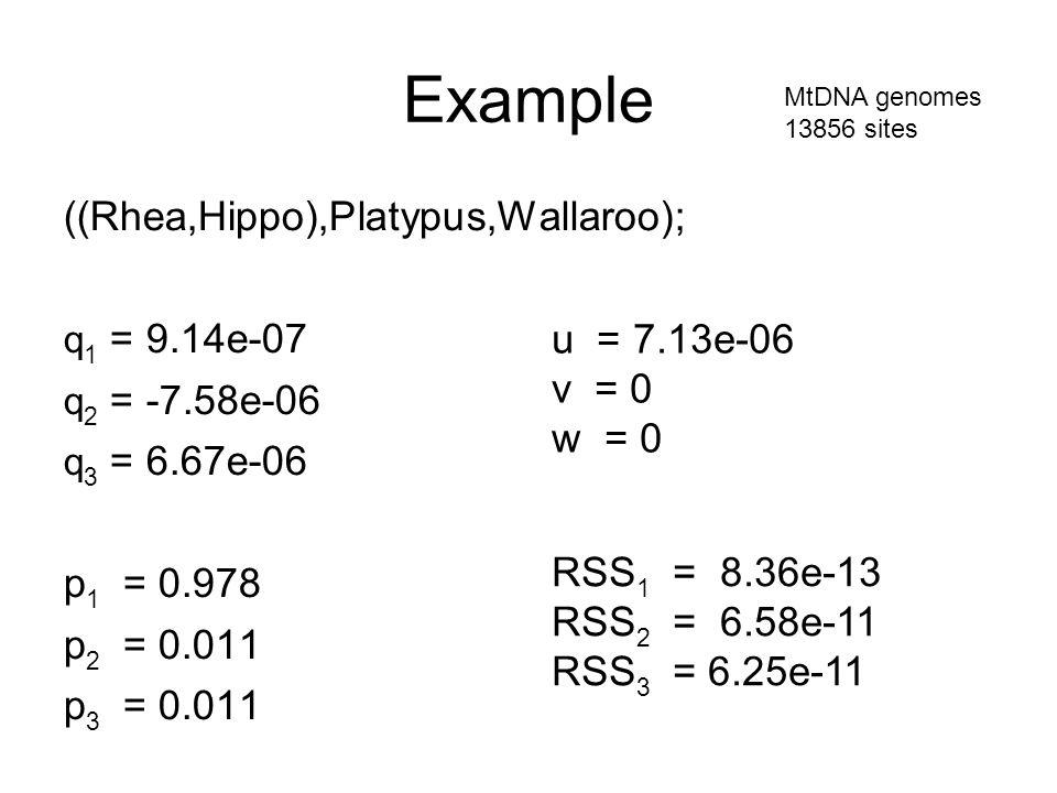 Example ((Rhea,Hippo),Platypus,Wallaroo); q 1 = 9.14e-07 q 2 = -7.58e-06 q 3 = 6.67e-06 p 1 = 0.978 p 2 = 0.011 p 3 = 0.011 MtDNA genomes 13856 sites RSS 1 = 8.36e-13 RSS 2 = 6.58e-11 RSS 3 = 6.25e-11 u = 7.13e-06 v = 0 w = 0