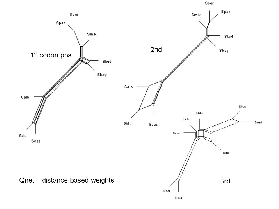 1 st codon pos 2nd 3rd Qnet – distance based weights