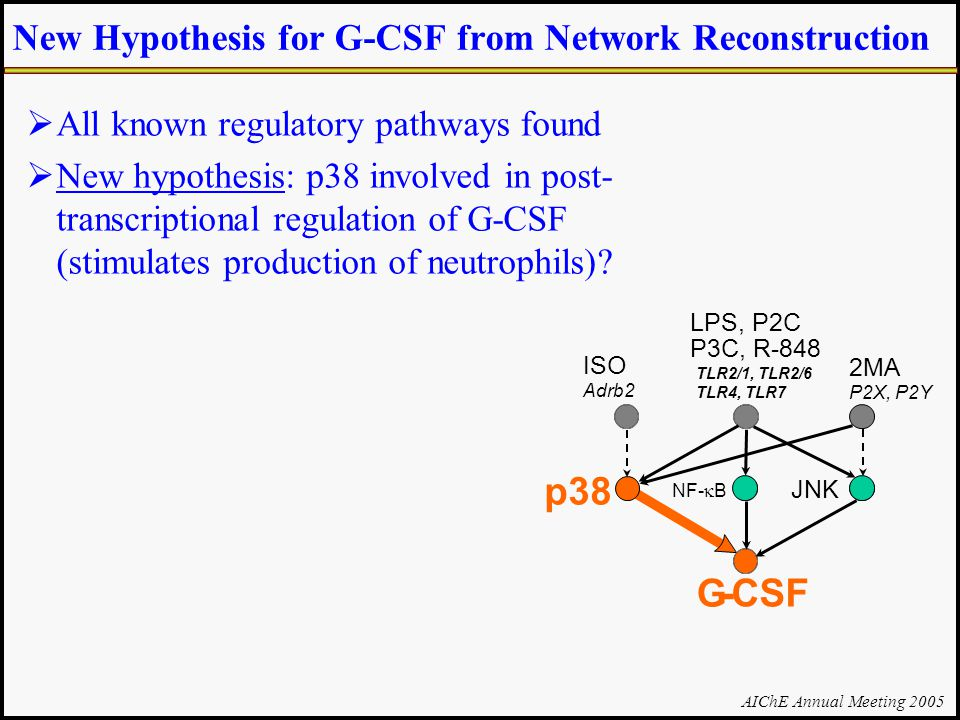 AIChE Annual Meeting 2005 New Hypothesis for G-CSF from Network Reconstruction  All known regulatory pathways found  New hypothesis: p38 involved in post- transcriptional regulation of G-CSF (stimulates production of neutrophils).