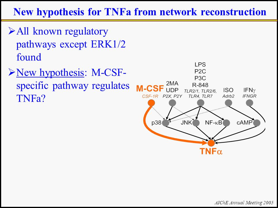 AIChE Annual Meeting 2005 New hypothesis for TNFa from network reconstruction  All known regulatory pathways except ERK1/2 found  New hypothesis: M-CSF- specific pathway regulates TNFa