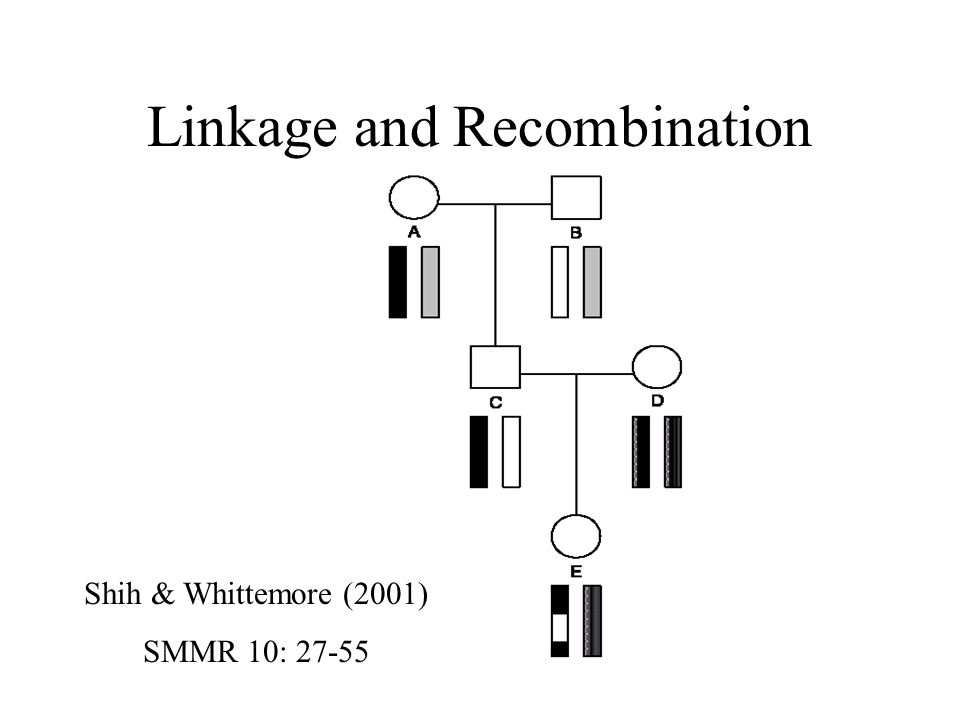 Linkage and Recombination Shih & Whittemore (2001) SMMR 10: 27-55