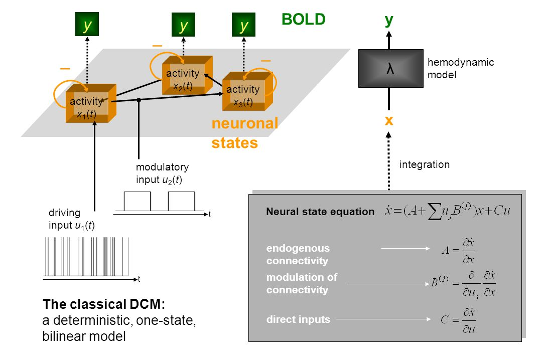 endogenous connectivity direct inputs modulation of connectivity Neural state equation hemodynamic model λ x y integration BOLD yy y activity x 1 (t) activity x 2 (t) activity x 3 (t) neuronal states t driving input u 1 (t) modulatory input u 2 (t) t    The classical DCM: a deterministic, one-state, bilinear model