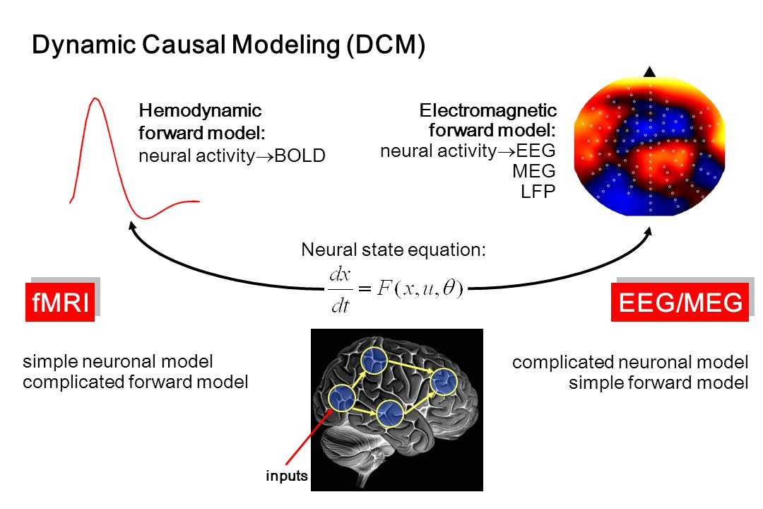Neural state equation: Electromagnetic forward model: neural activity  EEG MEG LFP Dynamic Causal Modeling (DCM) simple neuronal model complicated forward model complicated neuronal model simple forward model fMRI EEG/MEG inputs Hemodynamic forward model: neural activity  BOLD