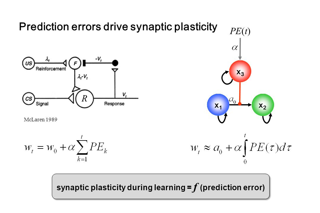 Prediction errors drive synaptic plasticity McLaren 1989 x1x1 x2x2 x3x3 PE(t) R synaptic plasticity during learning = f (prediction error)