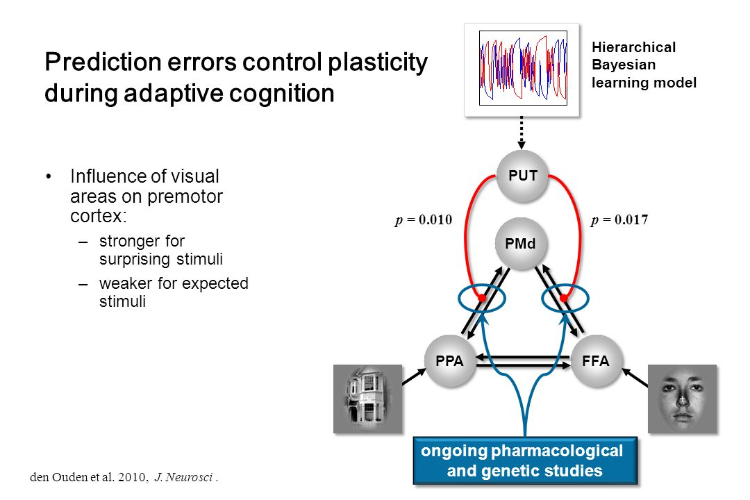 Prediction errors control plasticity during adaptive cognition Influence of visual areas on premotor cortex: –stronger for surprising stimuli –weaker for expected stimuli den Ouden et al.