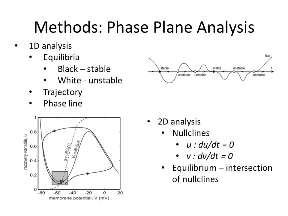 Methods: Phase Plane Analysis 1D analysis Equilibria Black – stable White - unstable Trajectory Phase line 2D analysis Nullclines u : du/dt = 0 v : dv/dt = 0 Equilibrium – intersection of nullclines