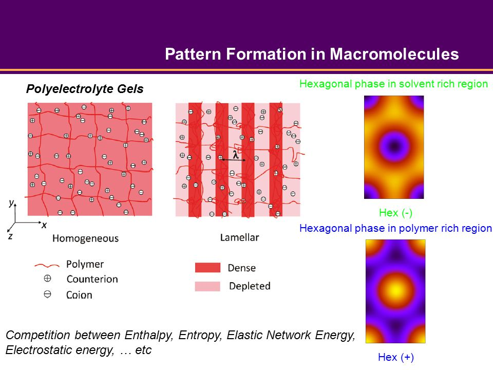 Pattern Formation in Macromolecules Polyelectrolyte Gels Hex (-) Hexagonal phase in solvent rich region Hex (+) Hexagonal phase in polymer rich region Competition between Enthalpy, Entropy, Elastic Network Energy, Electrostatic energy, … etc