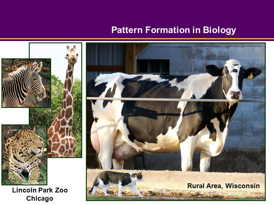 Pattern Formation in Biology Lincoln Park Zoo Chicago Rural Area, Wisconsin