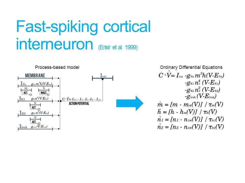 Fast-spiking cortical interneuron (Erisir et al.