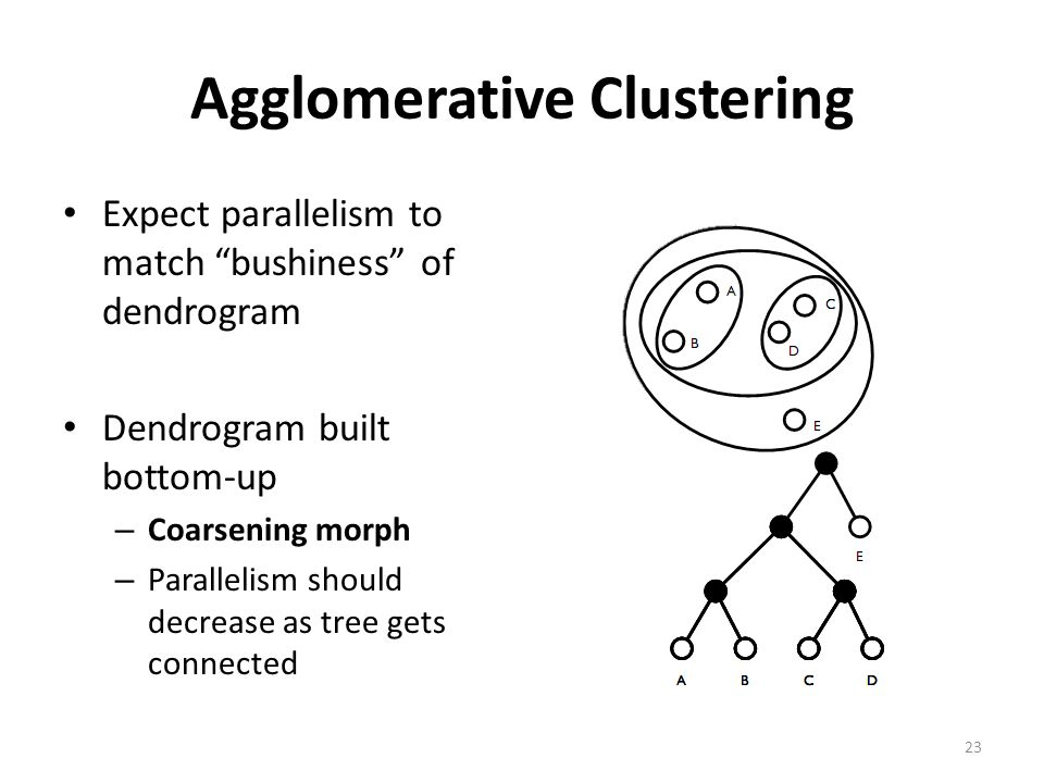 Agglomerative Clustering Expect parallelism to match bushiness of dendrogram Dendrogram built bottom-up – Coarsening morph – Parallelism should decrease as tree gets connected 23