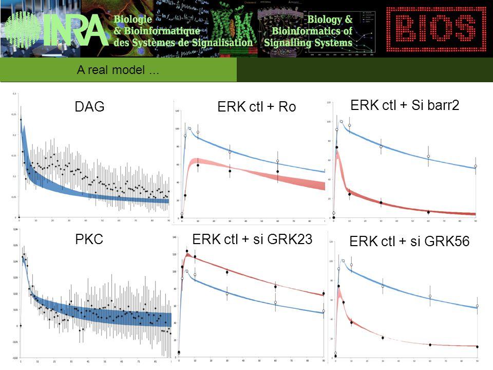 A real model... DAG PKC ERK ctl + Ro ERK ctl + Si barr2 ERK ctl + si GRK23 ERK ctl + si GRK56