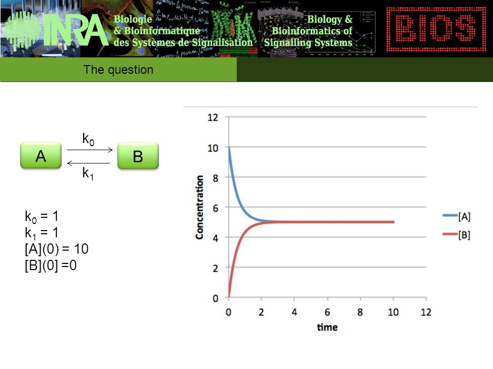The question A A B B k0k0 k1k1 k 0 = 2 k 1 = 1 [A](0) = 10 [B](0] =0
