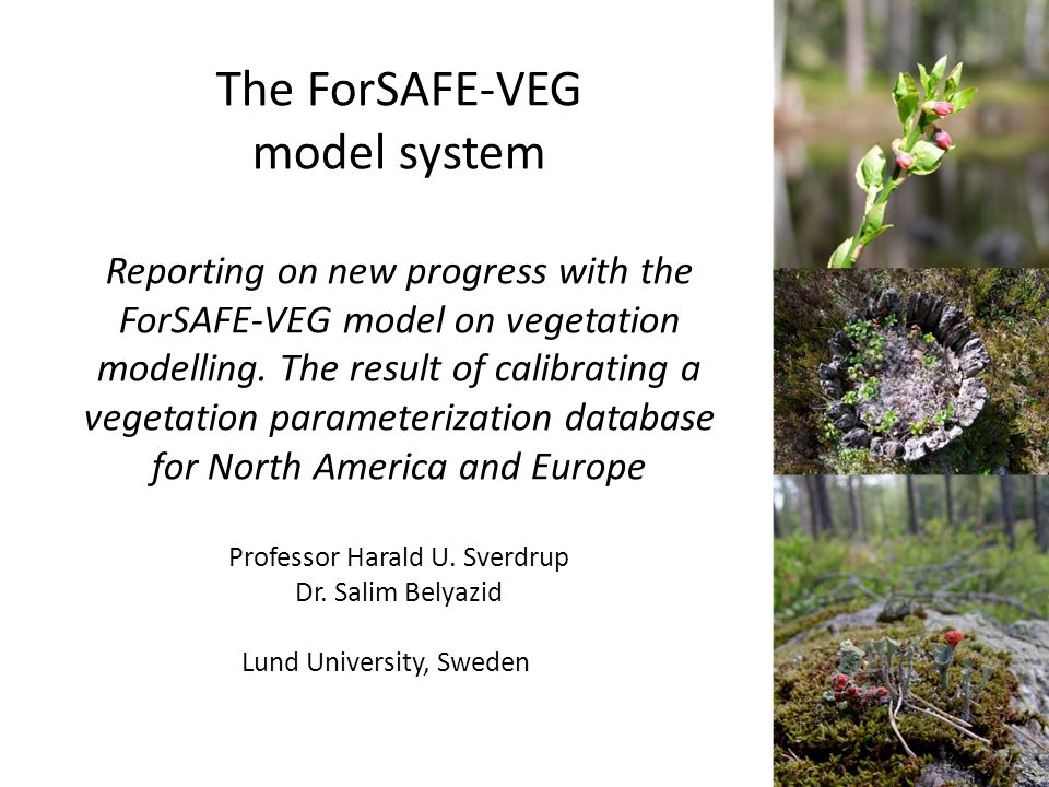 The ForSAFE- VEG model system