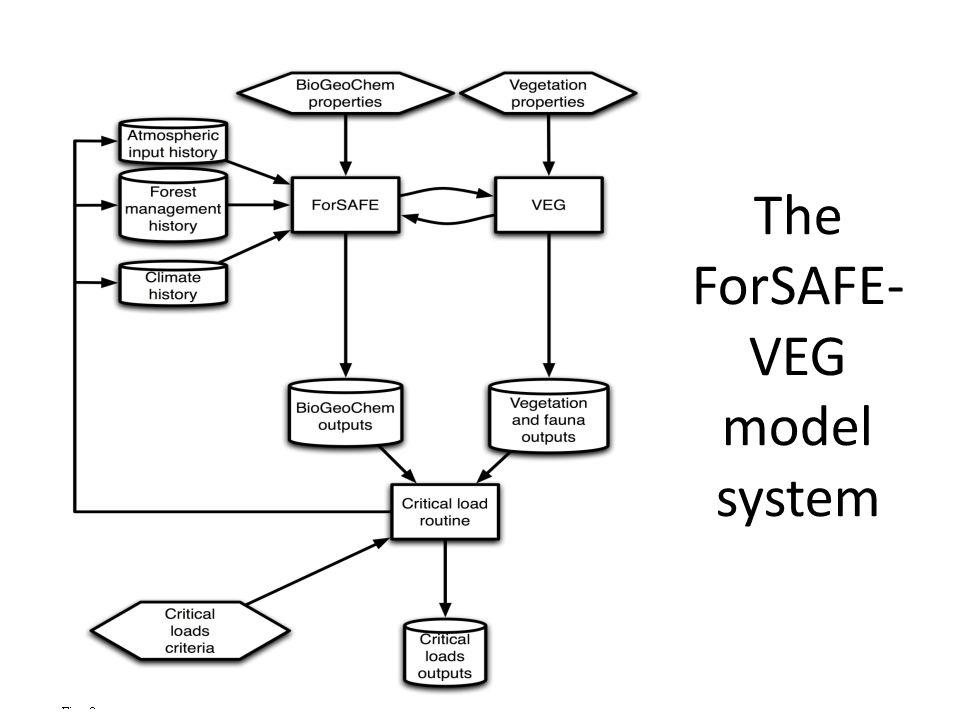 The ForSAFE- VEG model system