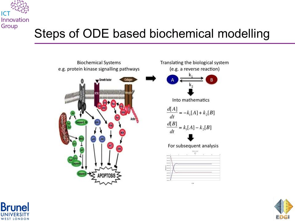 Steps of ODE based biochemical modelling