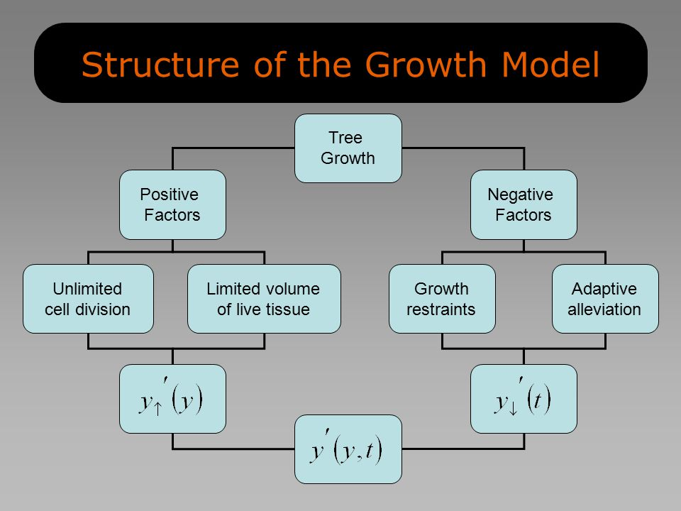 Structure of the Growth Model Unlimited cell division Limited volume of live tissue Tree Growth Positive Factors Negative Factors Growth restraints Adaptive alleviation
