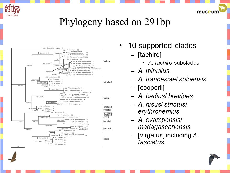 Phylogeny based on 291bp 10 supported clades –[tachiro] A.