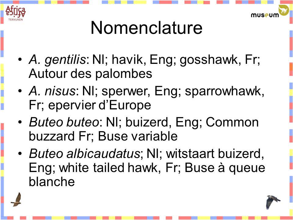 Nomenclature A. gentilis: Nl; havik, Eng; gosshawk, Fr; Autour des palombes A. nisus: Nl; sperwer, Eng; sparrowhawk, Fr; epervier d'Europe Buteo buteo