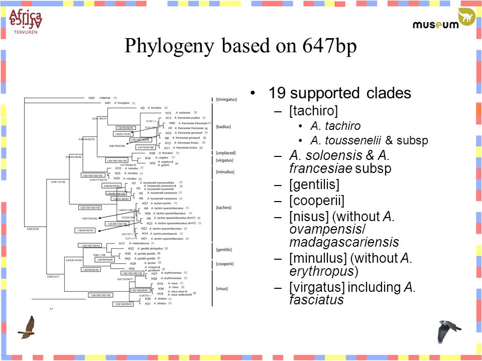Phylogeny based on 647bp 19 supported clades –[tachiro] A.