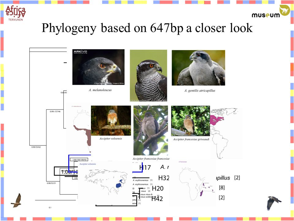 Phylogeny based on 647bp a closer look