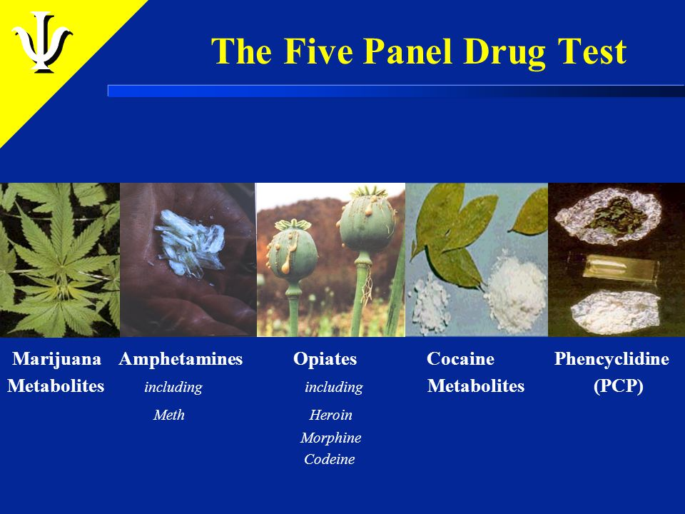 The Ten Panel Drug Test Barbiturates – Downers Benzodiazepines – Ativan, Librium, Xanax Methadone – Dolphine Methaqualone – Quaaludes Propoxyphene – Darvon Cannot be used for DOT testing purposes.