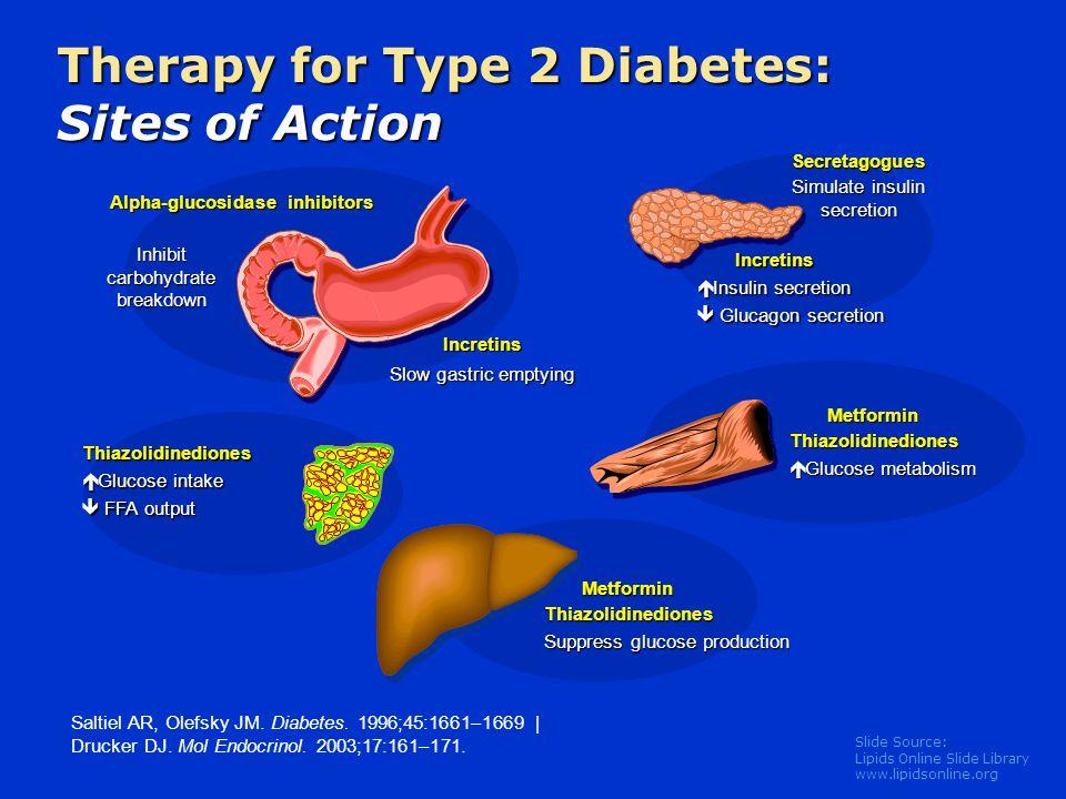 Slide Source: Lipids Online Slide Library www.lipidsonline.org Therapy for Type 2 Diabetes: Sites of Action Saltiel AR, Olefsky JM. Diabetes. 1996;45: