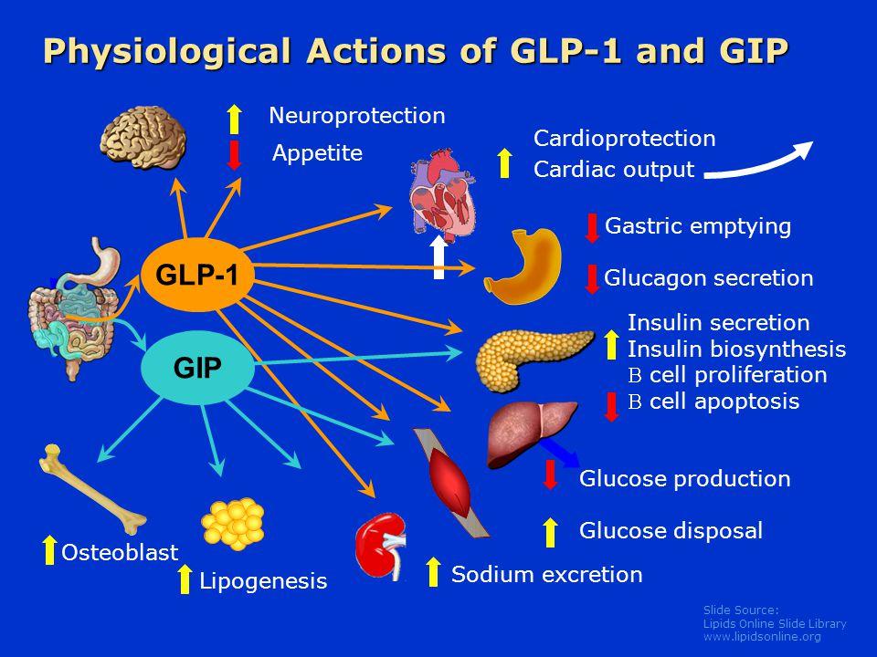 Slide Source: Lipids Online Slide Library www.lipidsonline.org Glucagon secretion Glucose production Glucose disposal Insulin secretion Insulin biosyn