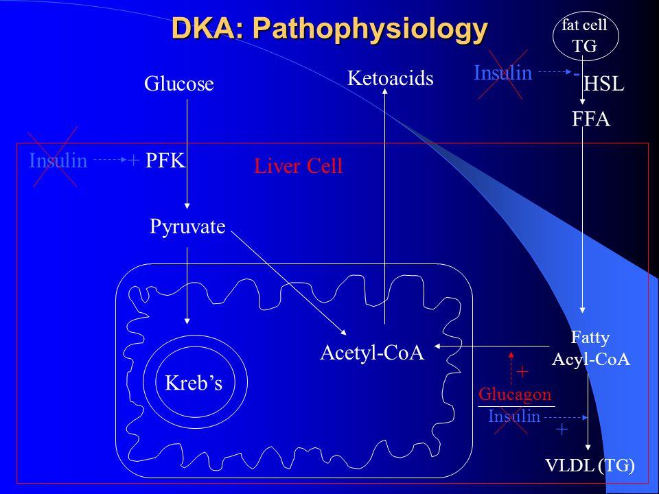 DKA: Pathophysiology Glucose Pyruvate Acetyl-CoA Ketoacids Kreb's + PFKInsulin fat cell TG FFA HSL Liver Cell Fatty Acyl-CoA Insulin - VLDL (TG) Glucagon Insulin + +