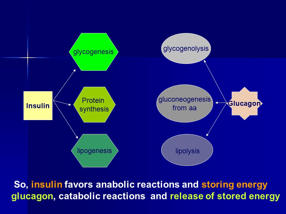 Insulin glycogenesis Protein synthesis lipogenesis Glucagon glycogenolysis gluconeogenesis from aa lipolysis So, insulin favors anabolic reactions and storing energy glucagon, catabolic reactions and release of stored energy