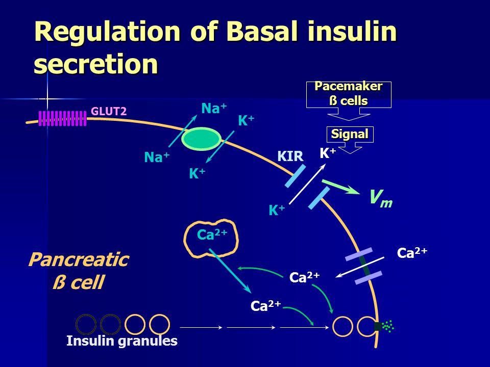 Regulation of Basal insulin secretion Na + K+K+ K+K+ K+K+ K+K+ GLUT2 Ca 2+ Voltage-gated Ca 2+ channel KIR Pancreatic ß cell Pacemaker ß cells Signal Insulin granules Ca 2+ VmVm Mature insulin granules contracts by exposure to high intracellular Ca.