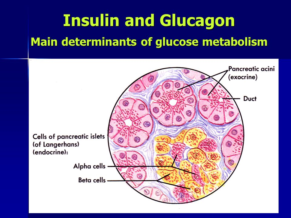 Insulin and Glucagon Main determinants of glucose metabolism