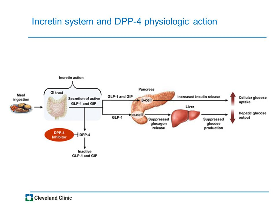 Incretin system and DPP-4 physiologic action