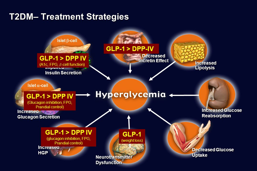 T2DM– Treatment Strategies Islet  -cell Impaired Insulin Secretion NeurotransmitterDysfunction Decreased Glucose Uptake Islet  -cellIncreased Glucagon Secretion IncreasedLipolysis Increased Glucose Reabsorption IncreasedHGP Decreased Incretin Effect GLP-1 > DPP IV (A1c, FPG,  -cell function) GLP-1 (weight loss) GLP-1 > DPP-IV GLP-1 > DPP IV (glucagon inhibition, FPG, Prandial control) GLP-1 > DPP IV (Glucagon inhibition, FPG, Prandial control)