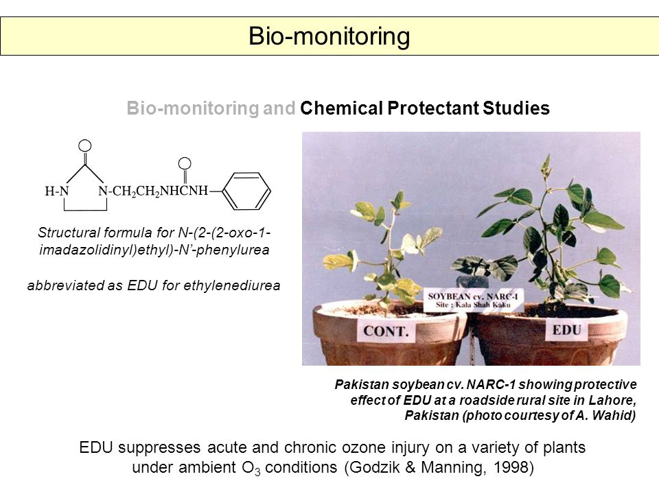 Bio-monitoring and Chemical Protectant Studies Structural formula for N-(2-(2-oxo-1- imadazolidinyl)ethyl)-N'-phenylurea abbreviated as EDU for ethylenediurea EDU suppresses acute and chronic ozone injury on a variety of plants under ambient O 3 conditions (Godzik & Manning, 1998) Pakistan soybean cv.