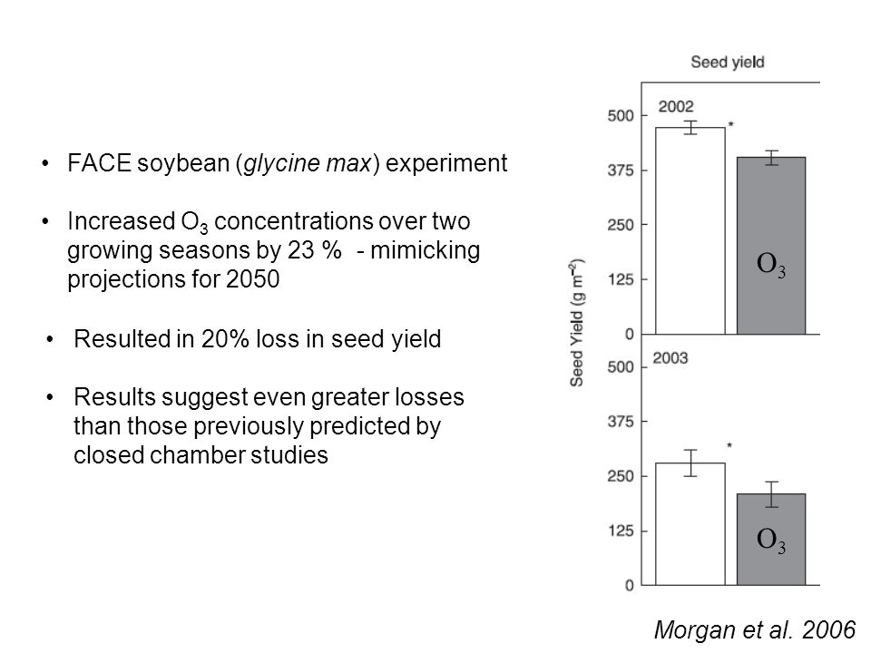 Morgan et al. 2006 FACE soybean (glycine max) experiment Increased O 3 concentrations over two growing seasons by 23 % - mimicking projections for 205
