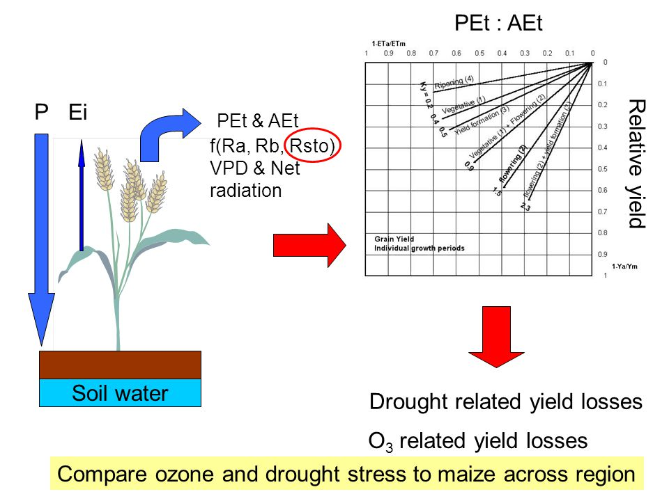 PEt & AEt f(Ra, Rb, Rsto) VPD & Net radiation P Ei Soil water PEt : AEt Relative yield Drought related yield losses O 3 related yield losses Compare ozone and drought stress to maize across region