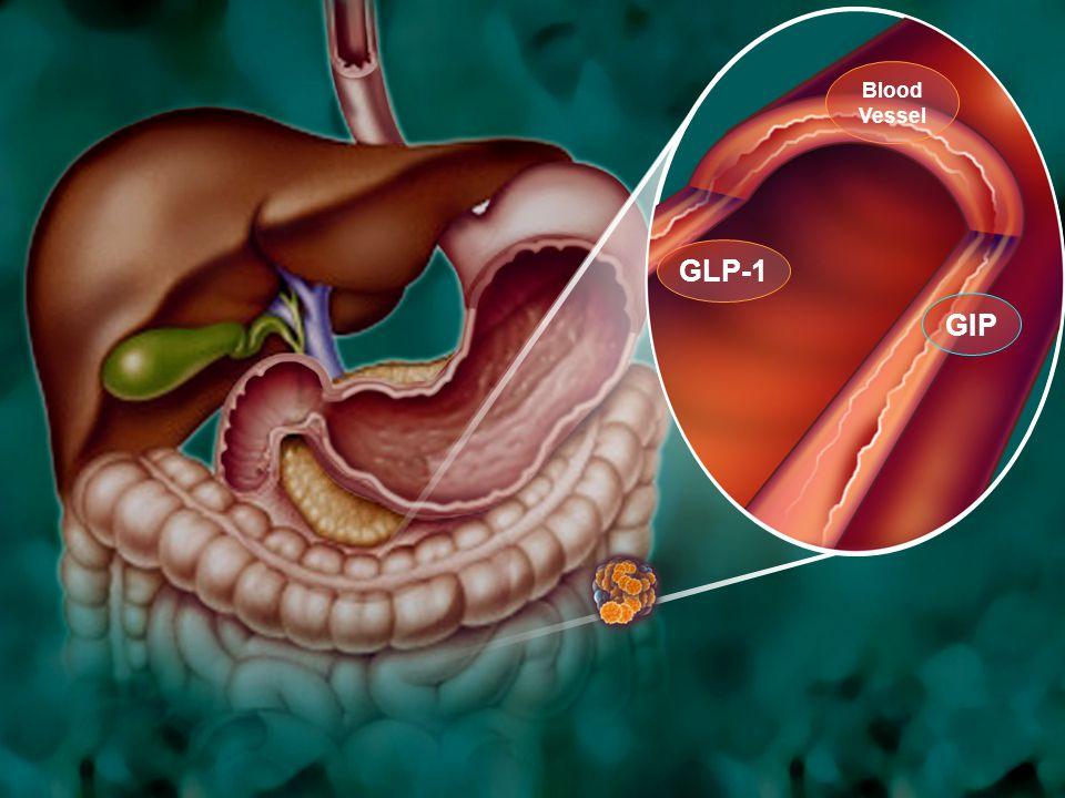 15 GIP GLP-1 Blood Vessel