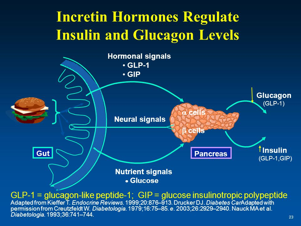 Incretin Hormones Regulate Insulin and Glucagon Levels GLP-1 = glucagon-like peptide-1; GIP = glucose insulinotropic polypeptide Adapted from Kieffer