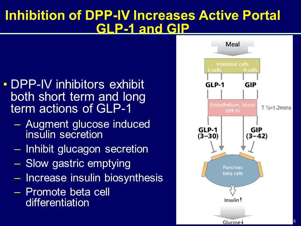 15 Inhibition of DPP-IV Increases Active Portal GLP-1 and GIP DPP-IV inhibitors exhibit both short term and long term actions of GLP-1 –Augment glucos