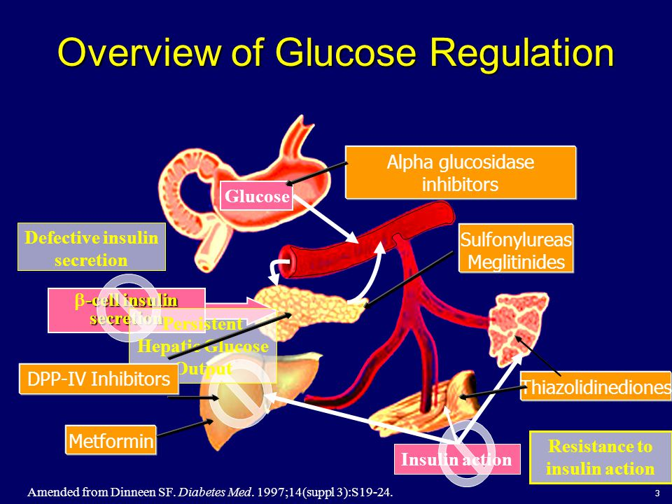 3 Overview of Glucose Regulation -cell insulin secretion  -cell insulin secretion Glucose Amended from Dinneen SF. Diabetes Med. 1997;14(suppl 3):S19