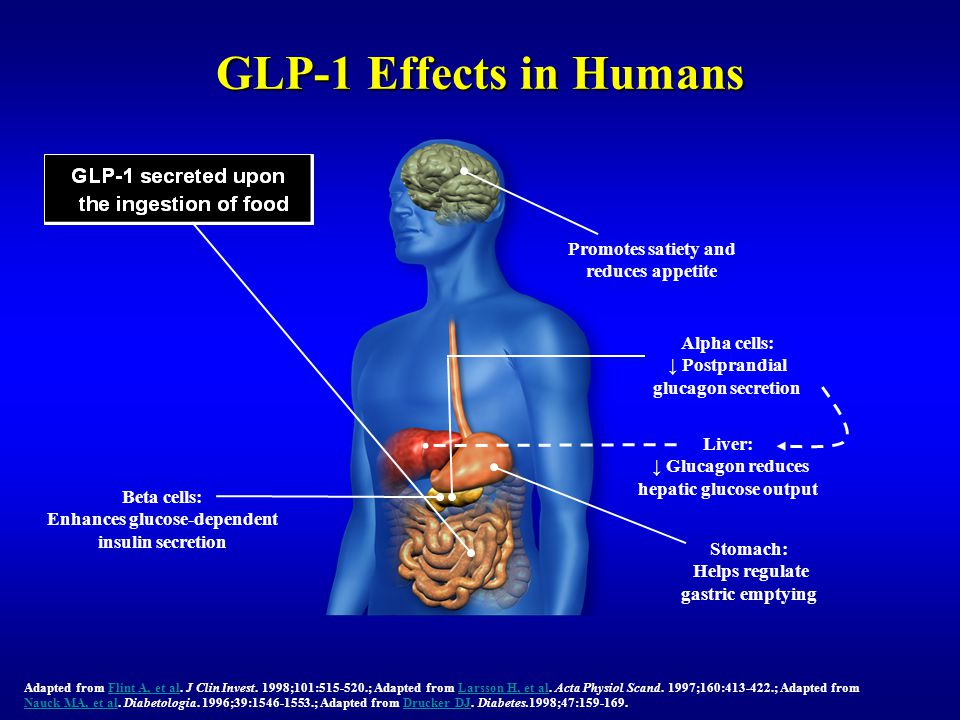GLP-1 Effects in Humans Promotes satiety and reduces appetite Beta cells: Enhances glucose-dependent insulin secretion Adapted from Flint A, et al. J