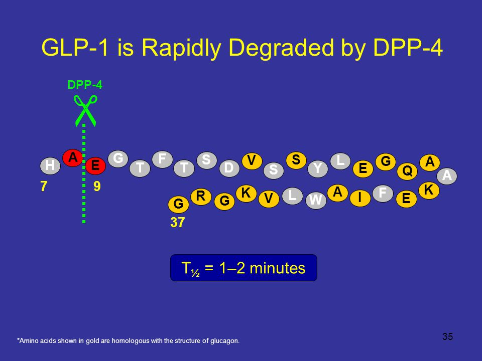 GLP-1 is Rapidly Degraded by DPP-4 A E  37 79 DPP-4 H T F T S D V S S Y L E G Q A A K E F I A W L V K G R G G T ½ = 1–2 minutes *Amino acids shown in gold are homologous with the structure of glucagon.