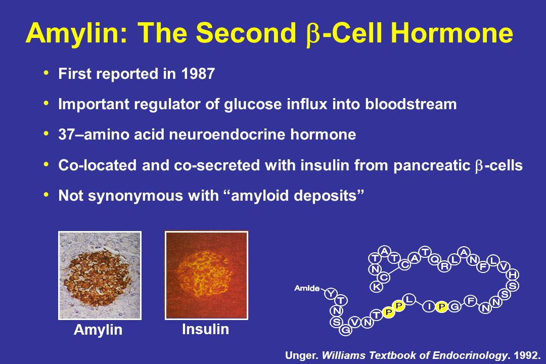 Amylin: The Second  -Cell Hormone First reported in 1987 Important regulator of glucose influx into bloodstream 37–amino acid neuroendocrine hormone