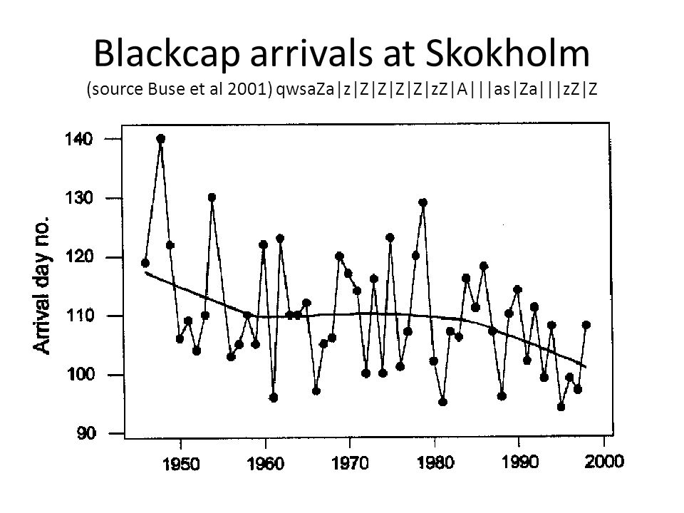 Blackcap arrivals at Skokholm (source Buse et al 2001) qwsaZa|z|Z|Z|Z|Z|zZ|A|||as|Za|||zZ|Z